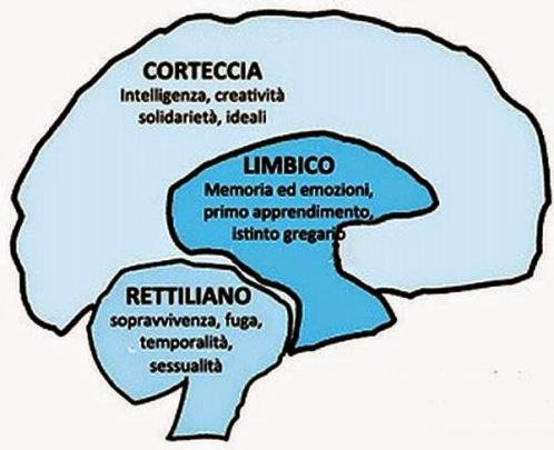 3-strati-del-cervello 2