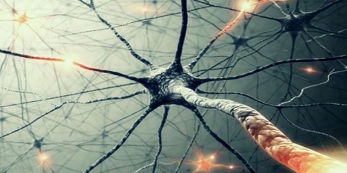 neuroni-specchio-4