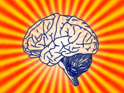 brain-78440_960_720