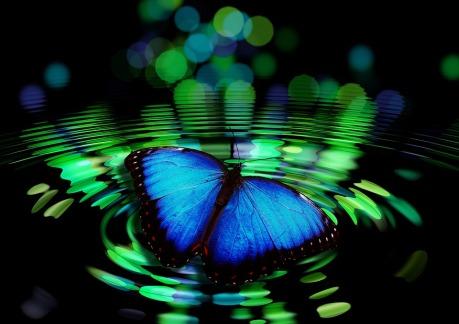 butterfly-492536_960_720